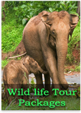 KErala Wild life Tour Package