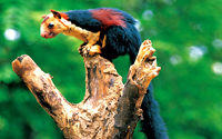 morningkerala.com - Wildlife